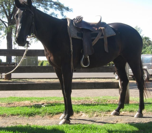 La Cygne Noire (AUS) 2003