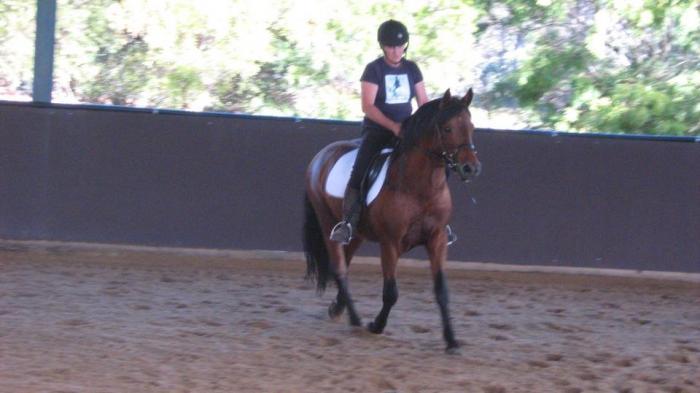 Connemara Sport Horses sale