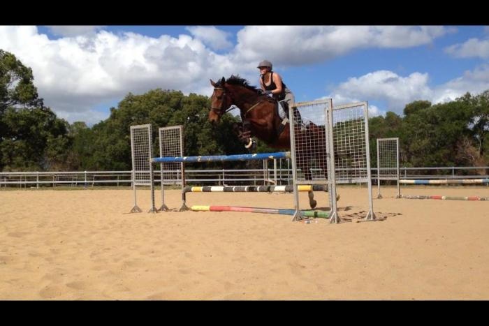 confidence booster eventer for sale!