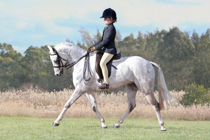 Magnificent Hunter All Rounder Show & Jumping Pony