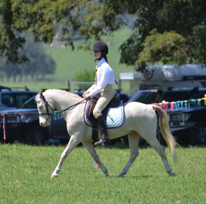 Ultimate All-Rounder Welsh A Pony