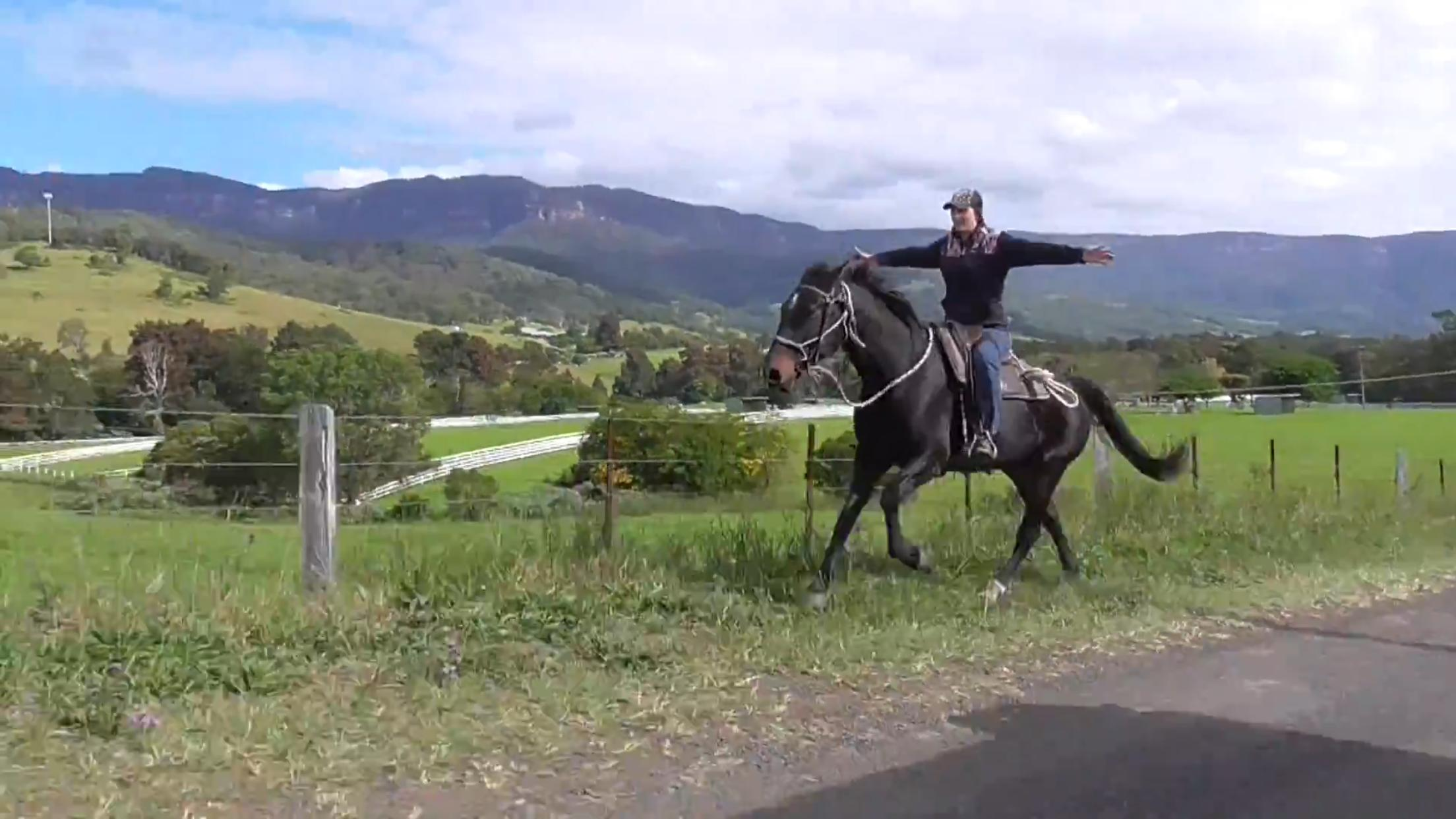 'RASTUS'-SUPERSTAR ALLROUNDER GELDING   video