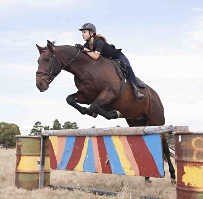 Pony Club Mount 15.2hh
