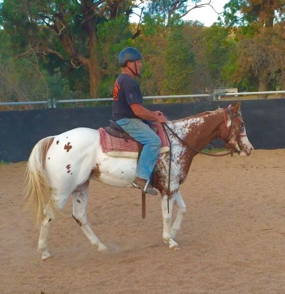 Willis Appaloosa Gelding