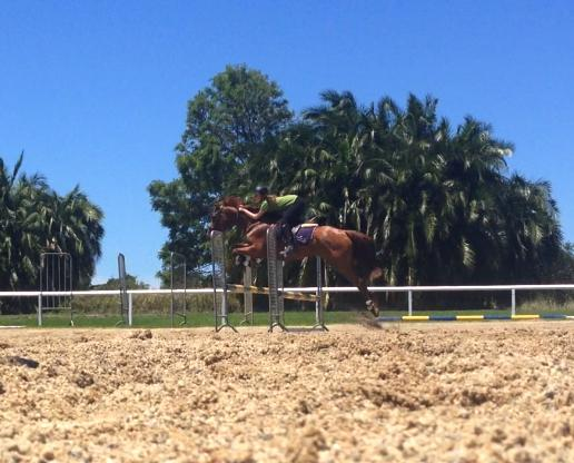 Super Jumper or Broodmare by Conquistador