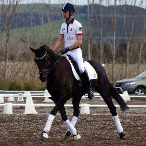 WOW - STUNNING DRESSAGE PROSPECT/SHOWING
