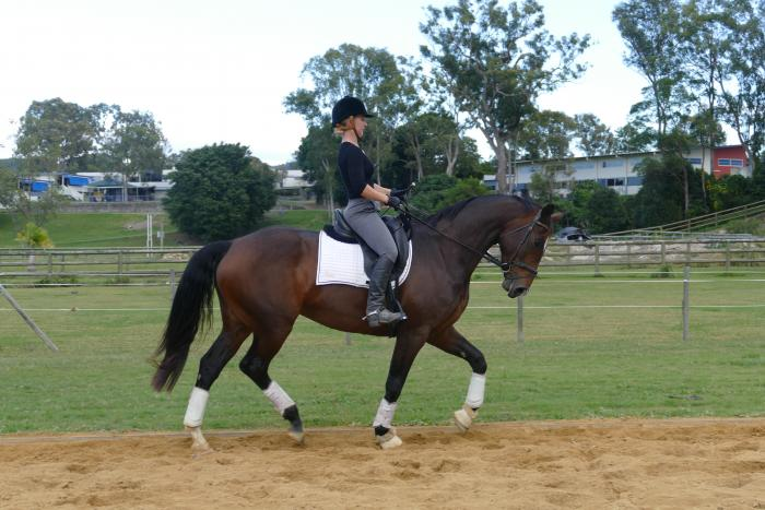 Stunning Hunter or Dressage Prospect
