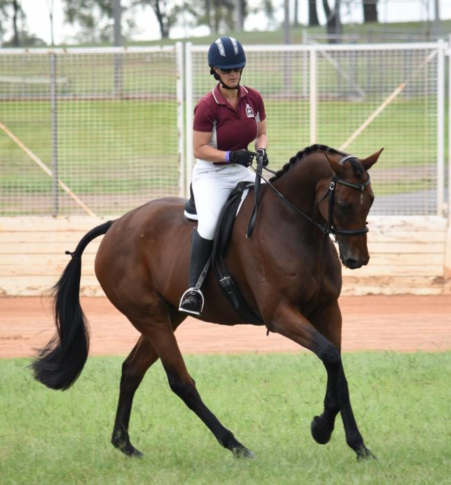 Competitive Dressage Mount