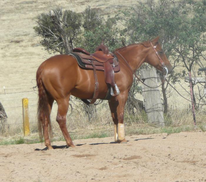 Experienced fully trained cutting horse Q54027