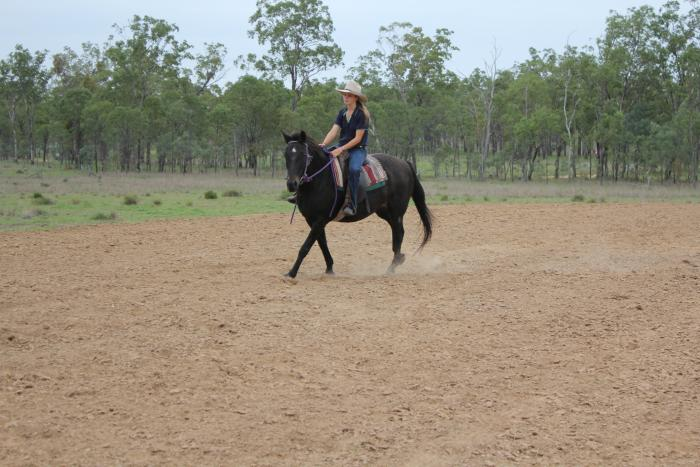 Reliable, safe  gelding