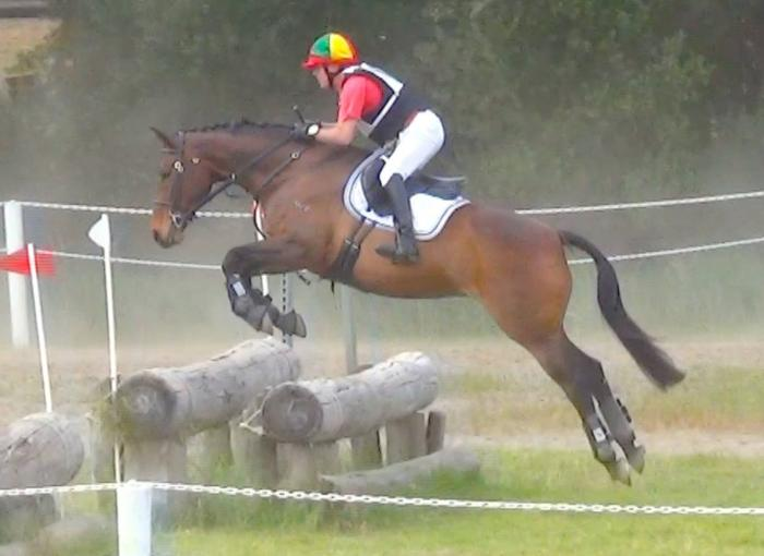 Stunning, Competitive Warmblood mare