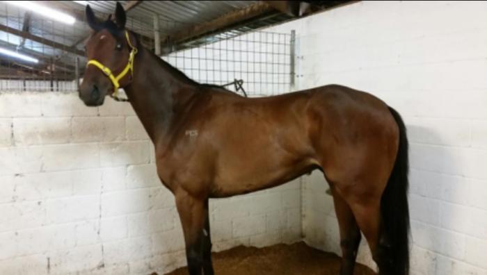 In the Spotlight racehorse
