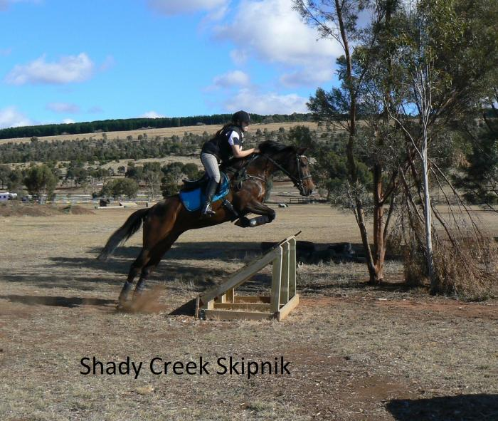 Well Bred Eventing/ Jumping Broodmare