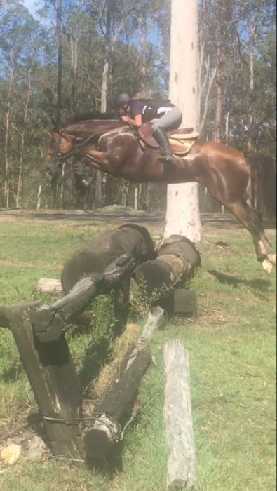 LOVING, TALENTED, 8 YEAR OLD, 16.2HH SOLID GELDING