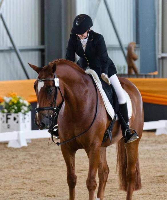 Advanced Level Dressage Horse Training PSG