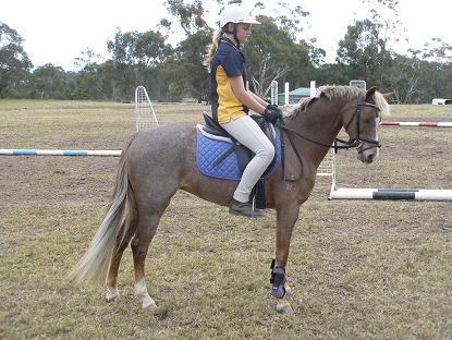 Gorgeous Ribbon Winning Pony Mare