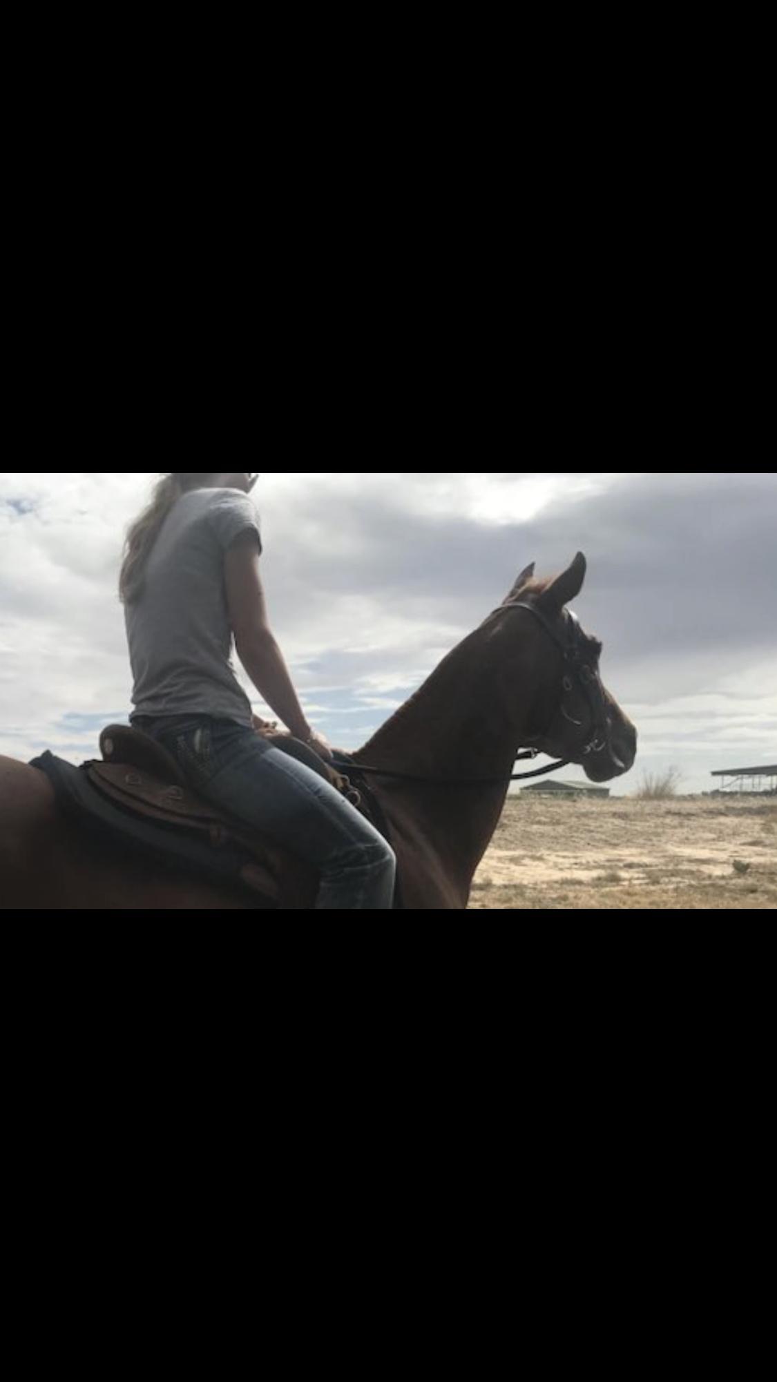 All round quarter horse mare