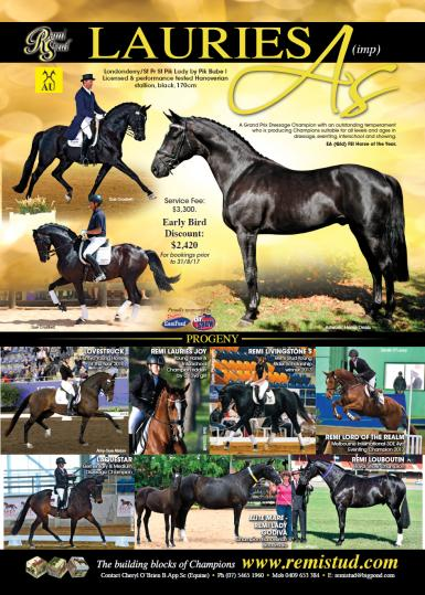 Lauries As (Imp) (Londonderry x Pik Bube I x Golden Miller). Image: Horse Deals ©