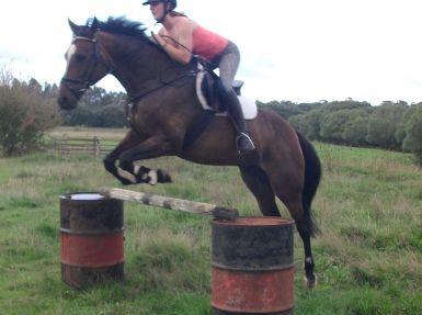 Jumping 105cm