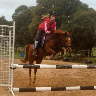 PERFECT ALLROUNDER MARE