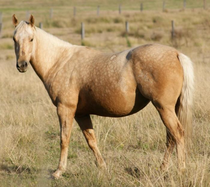 BROODMARE IN FOAL TO RECYCLED GENETICS IMP