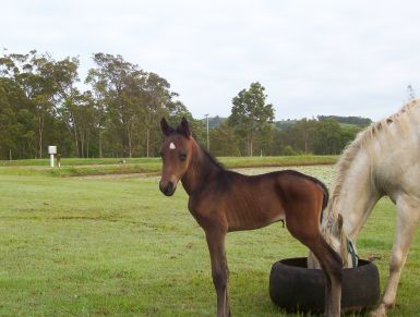 foal born March 2013