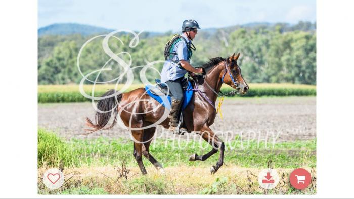 Well performed endurance mare
