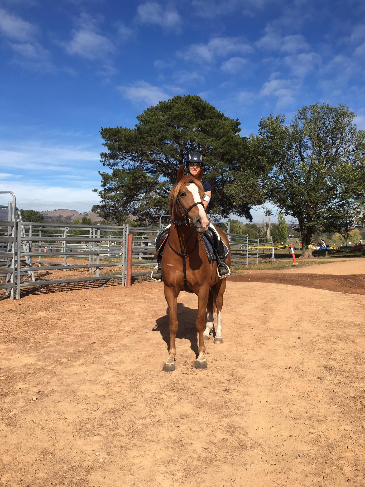 Australian Stockhorse gelding Reg