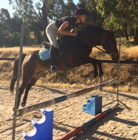 Price Reduced! Talented Welsh E Pony For Sale VIDE