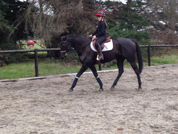 Sweet Black Mare - Suitable for Nervous Rider