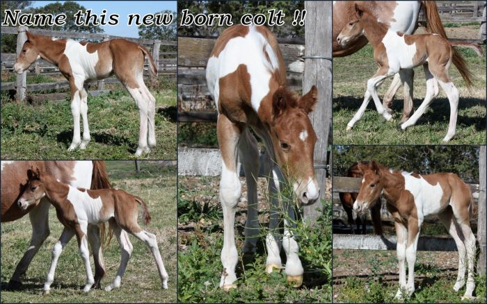 ONE KOOL KISSER (imp) 2013 colt