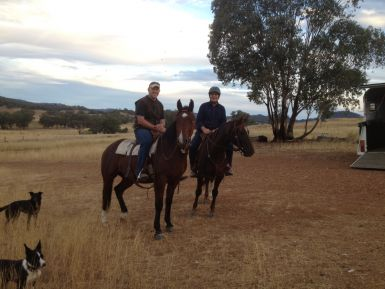 Merlin on left, ridden by his breaker. Heeler and Dave on the right