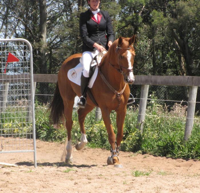 Quiet allrounder Pony club experience