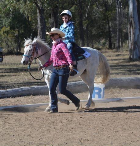 Quiet Beginner Pony 13hh 15yrs