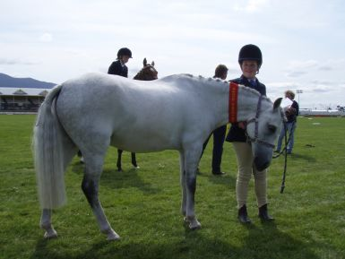 RHS Led Australian Pony Gelding