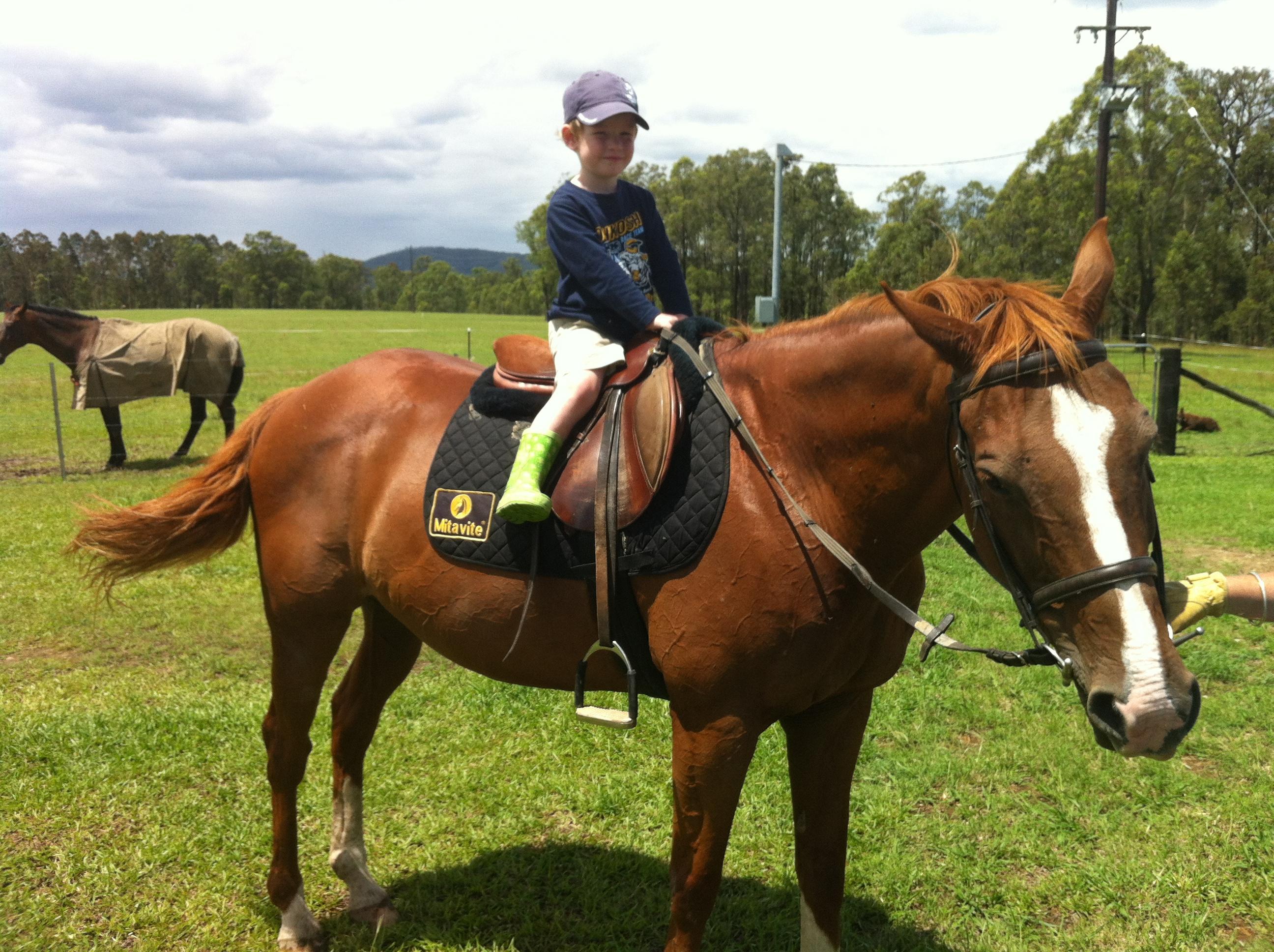 Cute Stockhorse