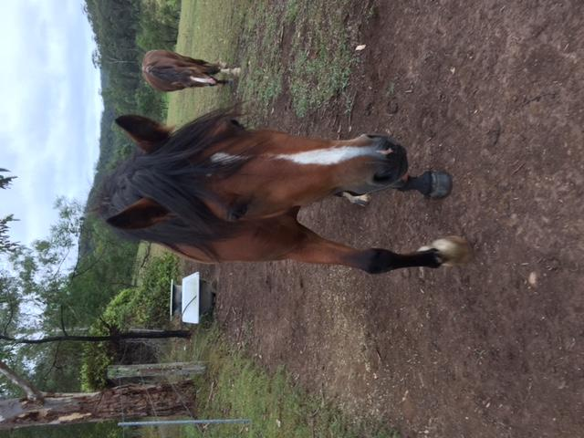 3yo 13.1hh Pony Filly