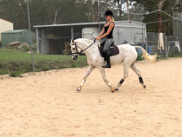 Quiet All Rounder Pony