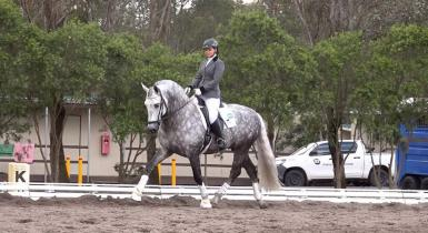2016 Australian Dressage Reserve Champion FEI Grade Ib