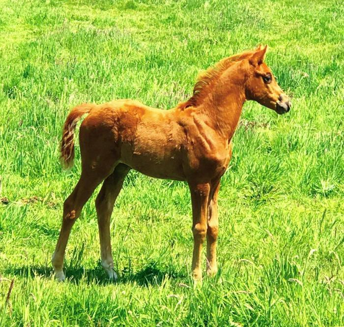 Stunning Filly Foal by Bling Du Rouet