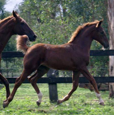 Flashy Filly Foal By Breitling W