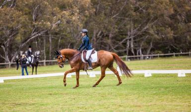 His first and only time in a dressage arena
