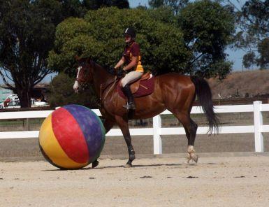 Big Ball at Pony club