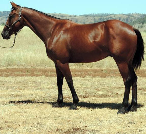 Peter Costello QH's offers Campdraft Prospect