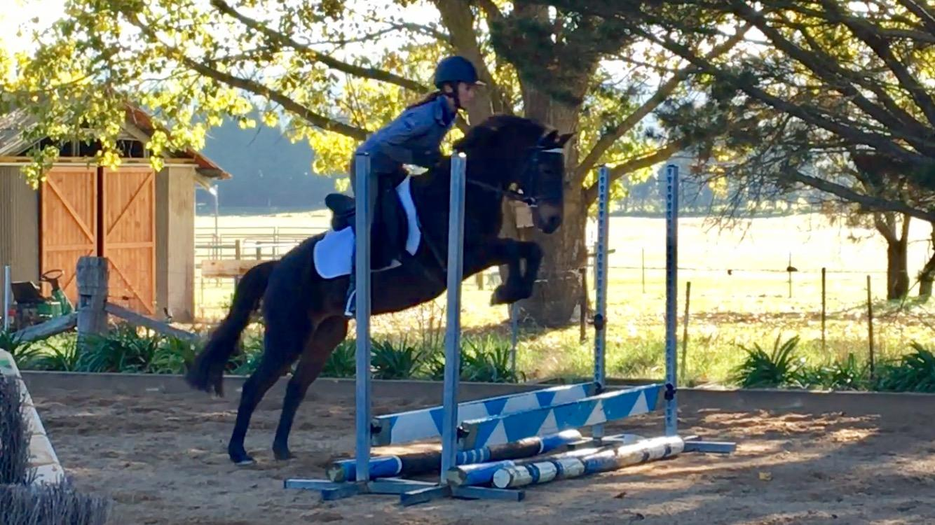 Well schooled 11yo Riding Pony
