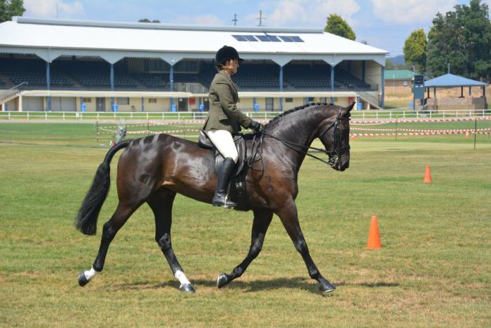 ALL OFFERS CONSIDERED!! Impressive warmblood