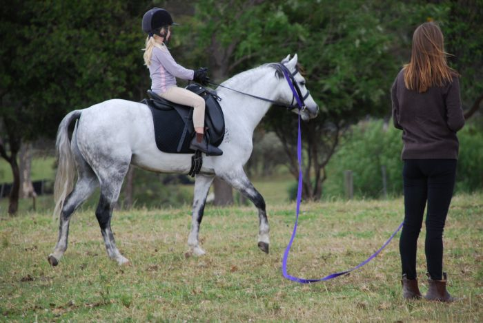 Gorgeous 12hh Gelding for lease