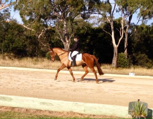 Just LIke Fire: Dressage ready, potential SJ/event