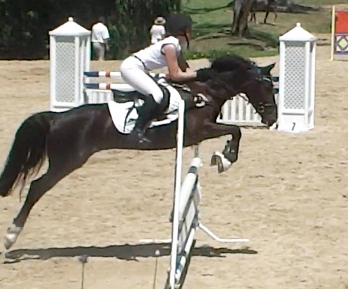 Competitive Performance Pony