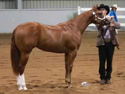 WP Aint She Phenomenal-Broodmare(pic as yearling)